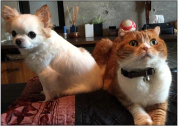 大杉漣の猫と犬.png