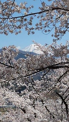 大宝寺公園2s.jpg