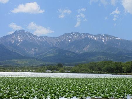八ヶ岳とレタスs.jpg
